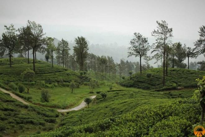 Piantagioni di té, treno Ella-Kandy, Sri Lanka