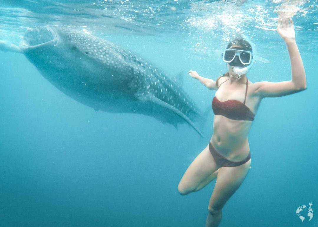 WHALE SHARKS AND WATERFALLS IN CEBU ISLAND, PHILIPPINES