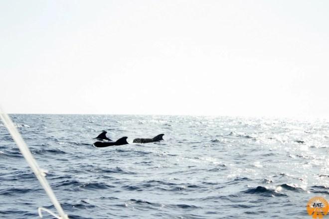balene bohol filippine