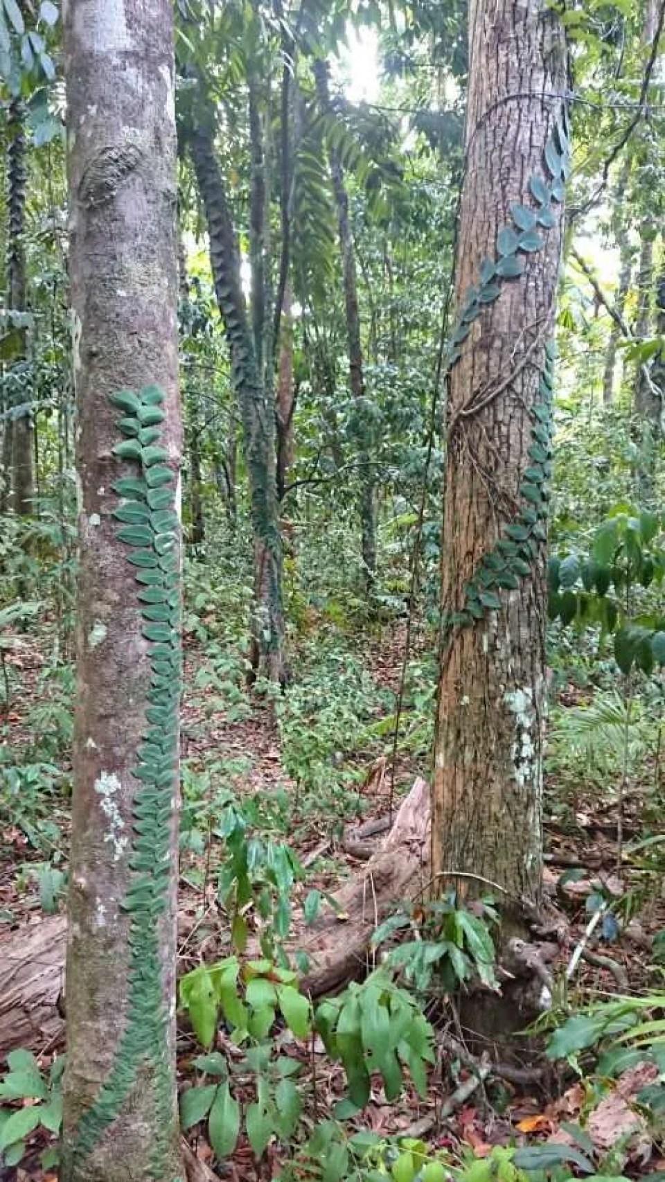tropical rainforest daintree