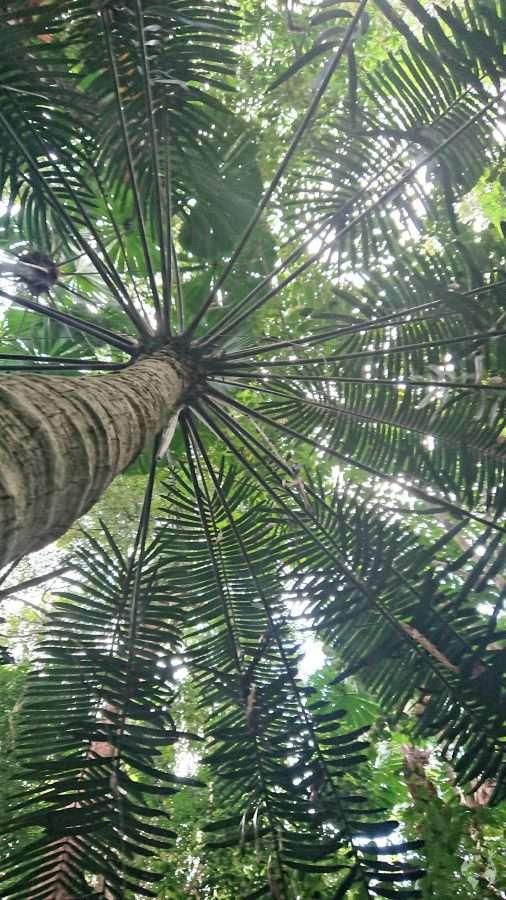 rainforest daintree