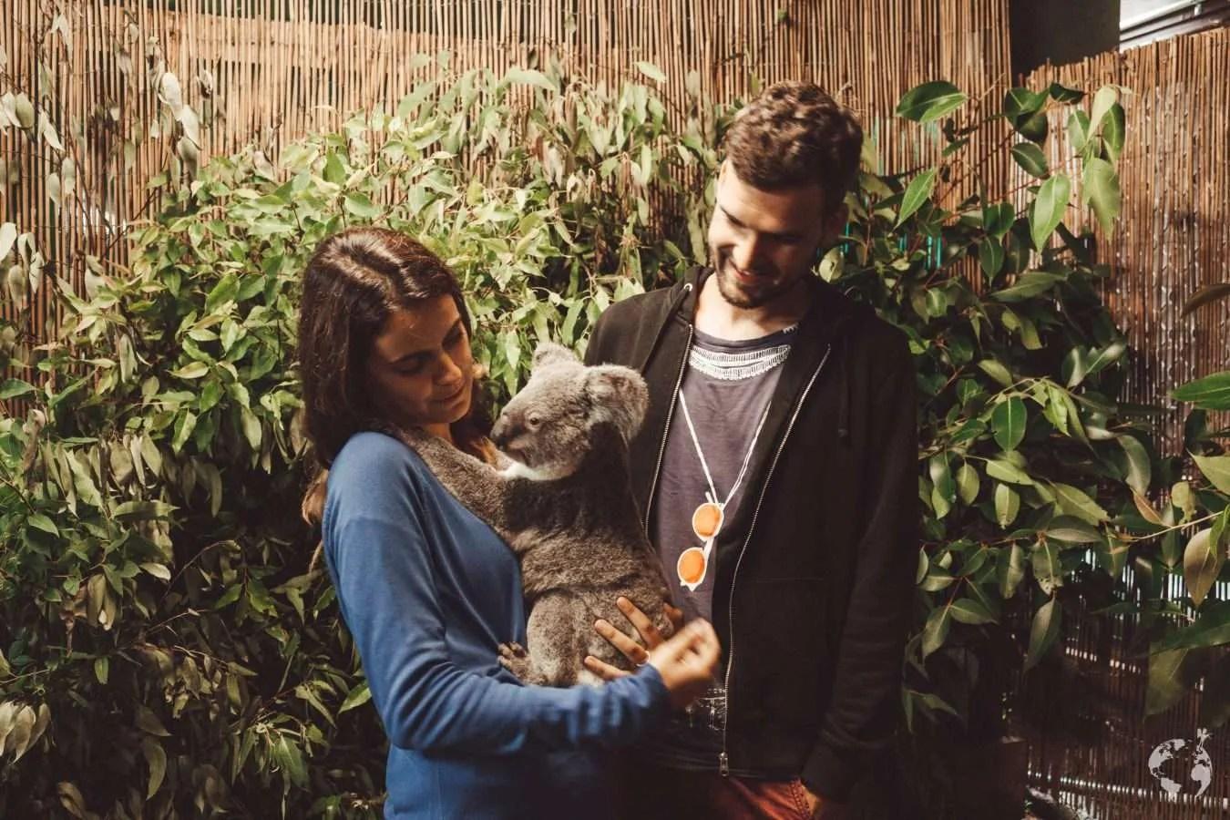 where to see koala queensland