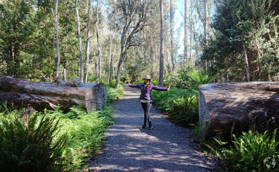 national park tasmania itinerary guide