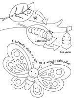 Butterfly-colouring-image