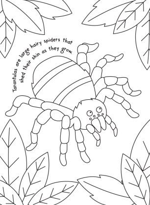Tarantula-colouring-image