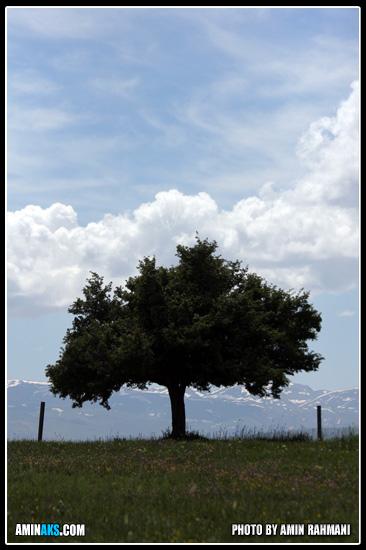 عکس طبیعت دیلمان