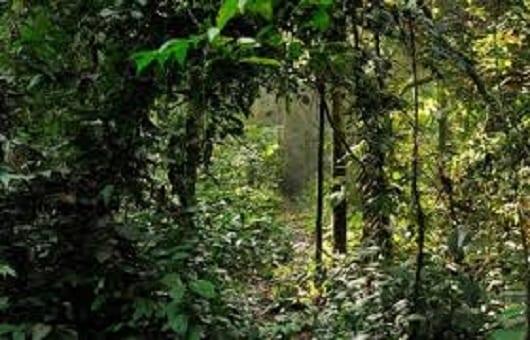 La forêt de Ziama en Guinée forestière