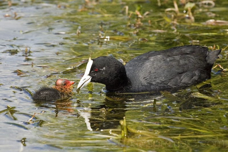 Mother bird feeding her baby - Animal & Insect Photos ...