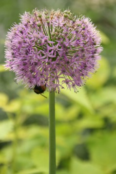 This is not a close up of a bee. It's taken from a distance.