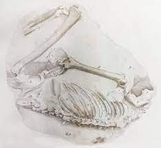 Conférence sur les hommes fossiles de Guadeloupe