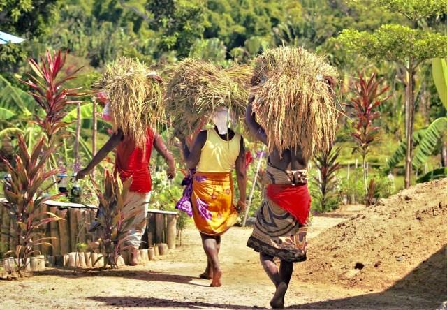 Transport de riz