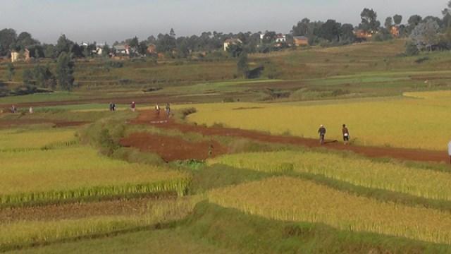 Riziculture dans le district