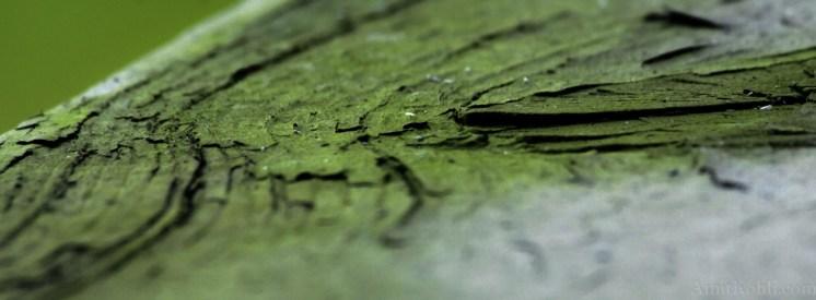 wood-decay