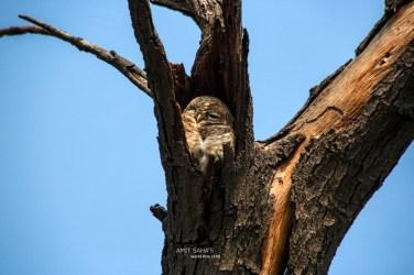09-majestic-owl
