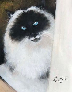 Portrait d'un chat himalayen