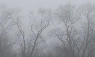 2016 begint met 50 tinten grijs