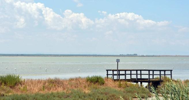 Flamingos in den Salzfeldern