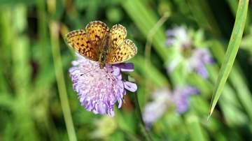 Schmetterlingssymbiose