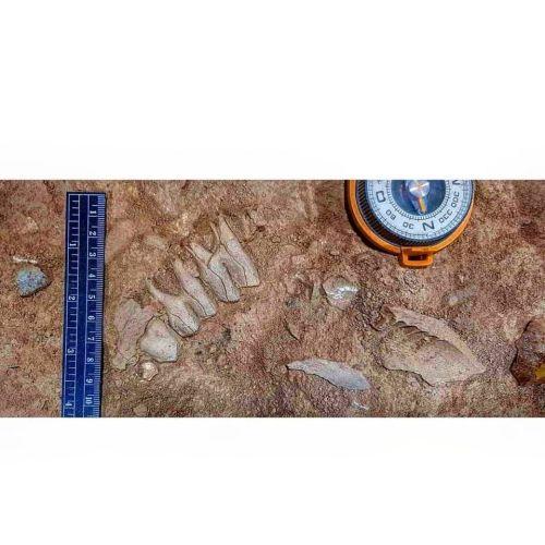 Завршени се овогодинешните палеолитски истражувања во пештерата Голема Пешт кај с. Здуње