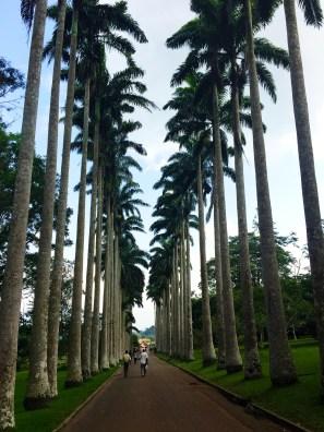 Aburi Botanical Garden, Aburi Ghana