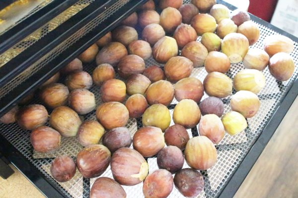 Whole figs on excalibur dehydrator trays