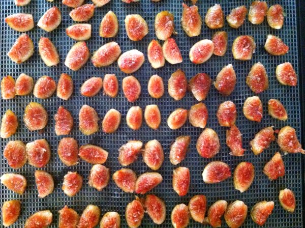 Cut figs on trays ready to dehydrate.