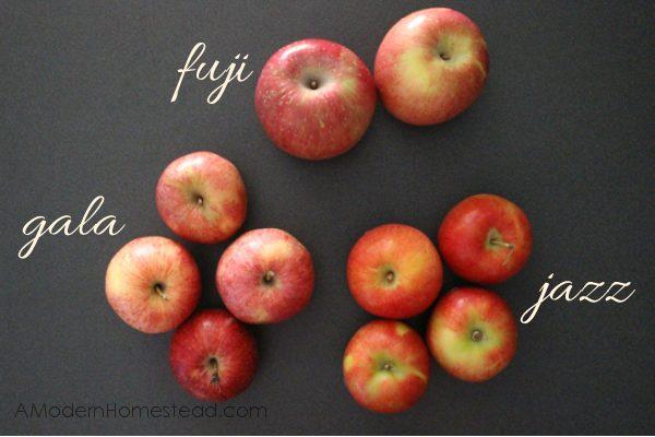 Best apple types for apple butter recipe