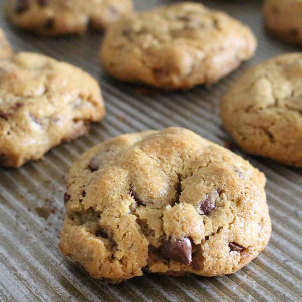 Square image of warm chocolate chip cookies on a metal baking sheet.