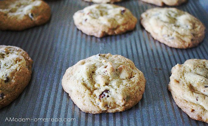 Fall cookie recipe, cranberry chocolate chip cookies