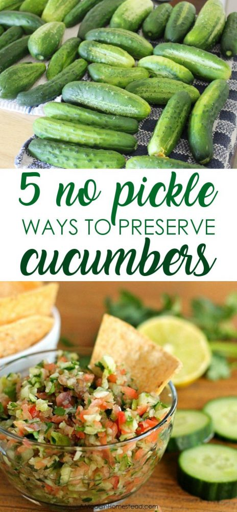 Cucumbers rapidly produce in most gardens for months every summer. Check out how to store cucumbers long term without having to turn them all into pickles!
