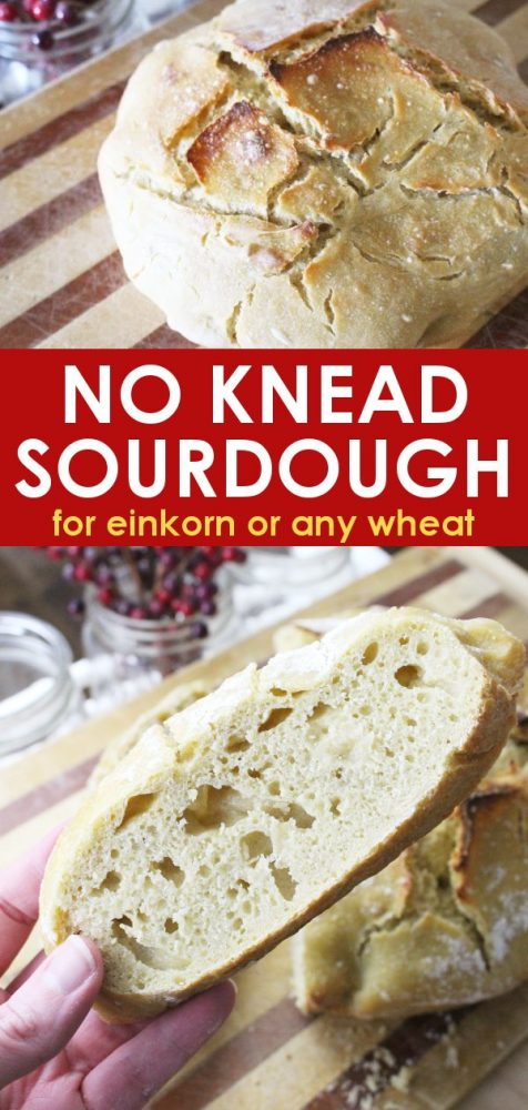 Easy no-knead sourdough bread that can be made using einkorn or any flour! The perfect crusty bread to go with soup or just on its own.