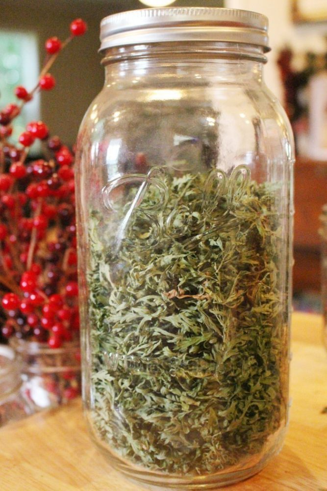 Canning jar full of dried carrot greens