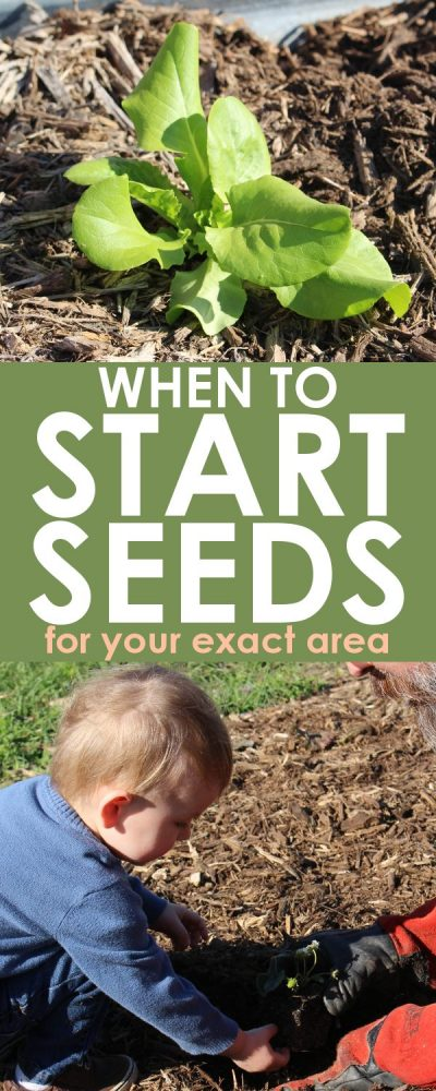 Seed Starting Planner: This seed starting tool will help you determine when to plant seeds for your zone. Just type in your last frost date, and the spreadsheet does the rest!