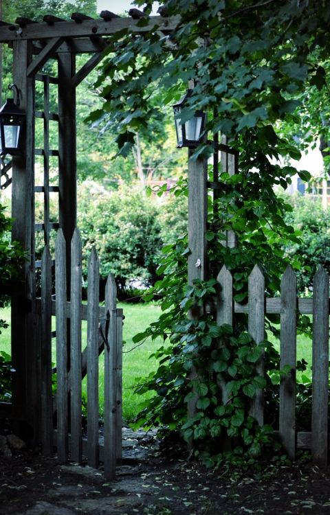 Rustic weathered wood garden gate sitting in a lush green garden.