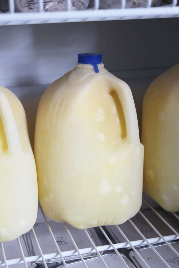 Close up of a gallon of frozen milk in the freezer