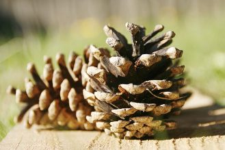 How to clean pinecones for pine cone crafts