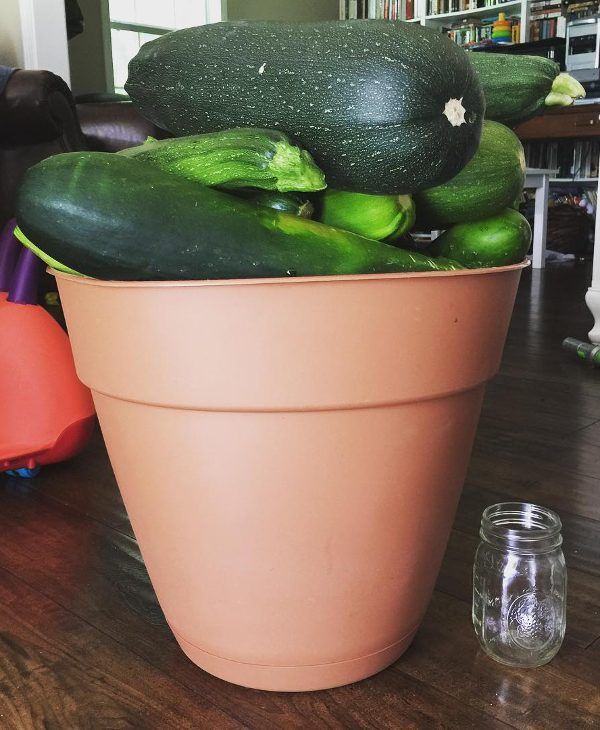 Large zucchini in a bucket