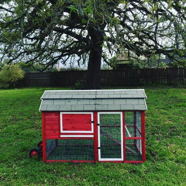 Red backyard chicken coop