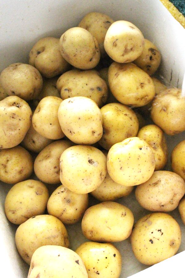 Fresh potatoes ready to wash and store