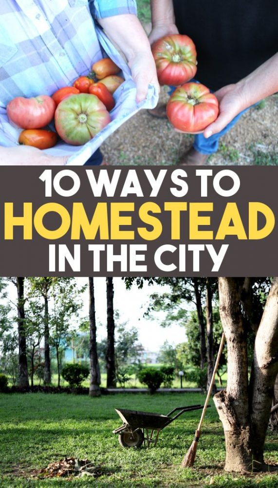 10 ways to homestead in the city