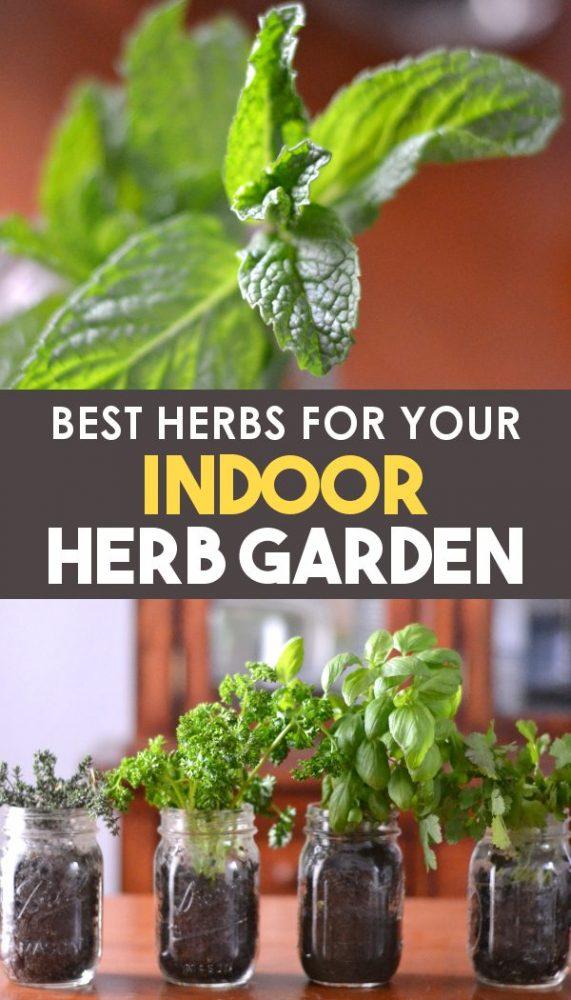 Indoor herb garden guide for Pinterest