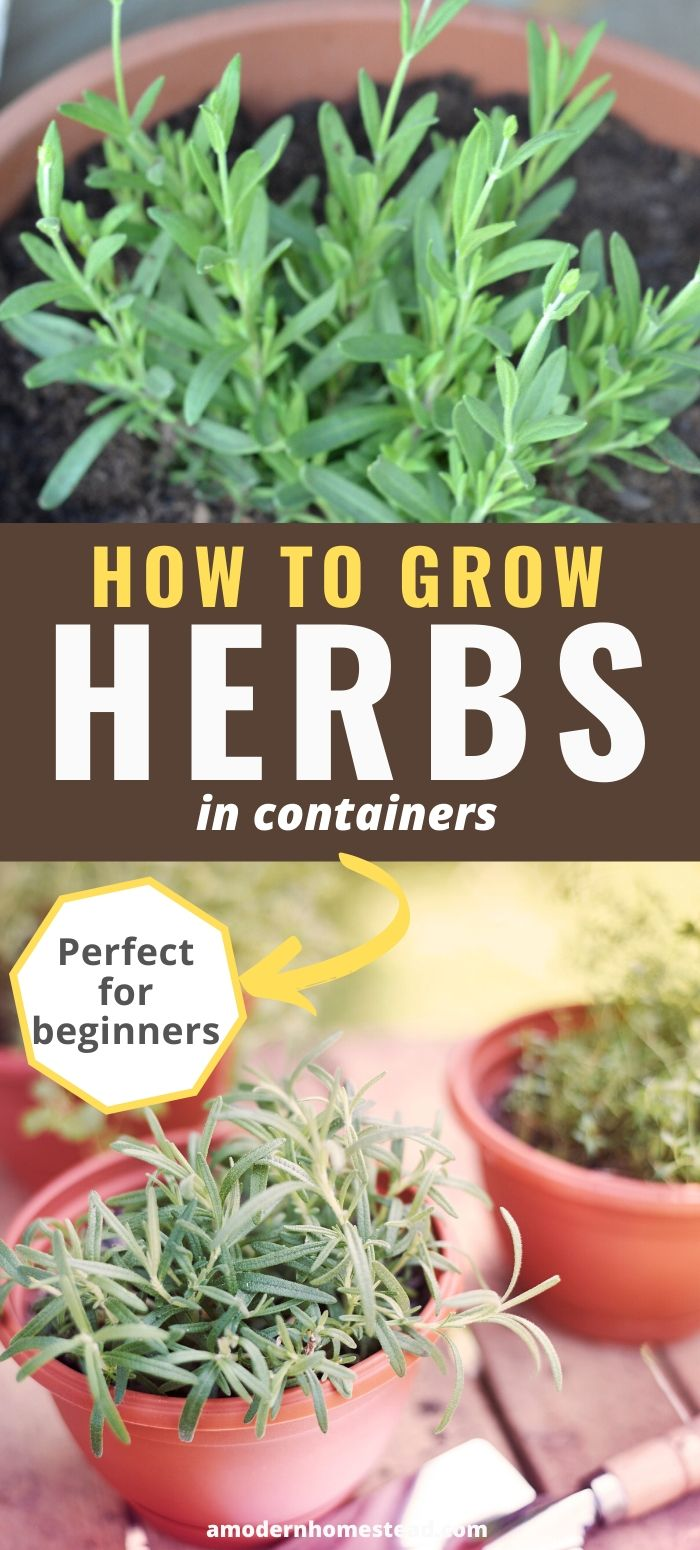 container gardening with herbs pinnable image