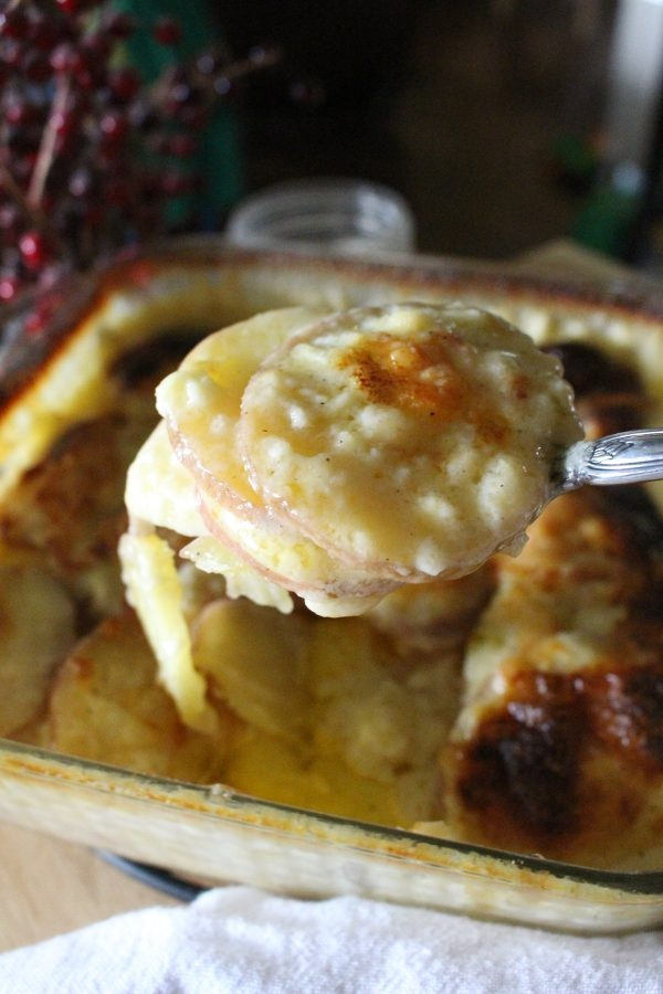 homemade potatoes au gratin up close