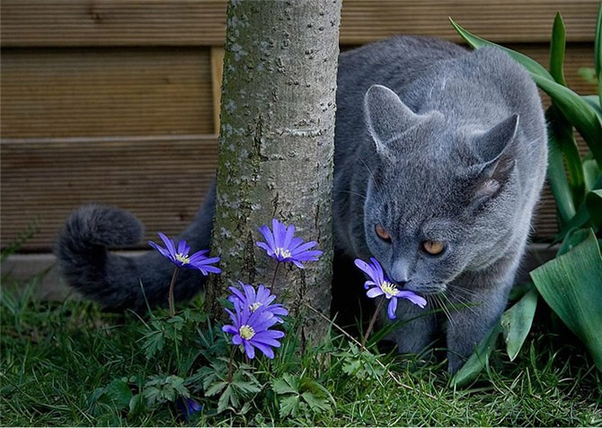 https://i2.wp.com/amolife.com/image/images/stories/Animals/Cats/Cats_Love_Flowers_.jpg