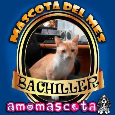 MASCOTA-DEL-MES-BACHILLER
