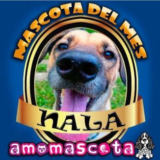 MASCOTA-DEL-MES-NALA