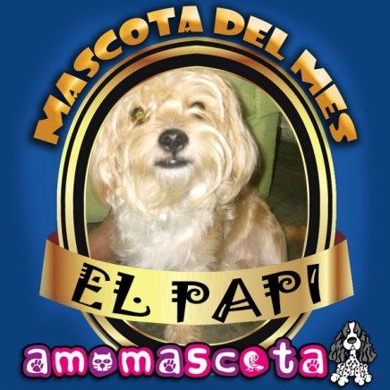 MASCOTA-DEL-MES-EL-PAPI