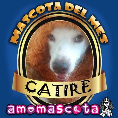 MASCOTA-DEL-MES-CATIRE