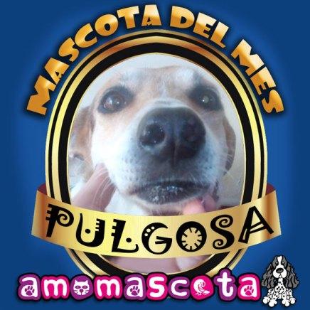 MASCOTA-DEL-MES-PULGOSA