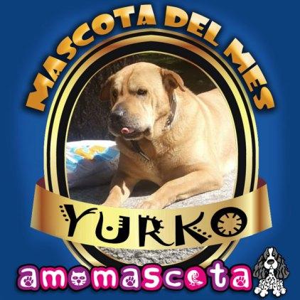 MASCOTA-DEL-MES-YURKO